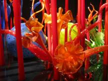 Chihuly's flowers