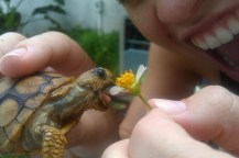 turtle_eating_flower_girl-600x400